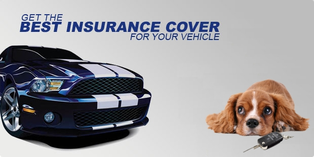 Car Insurance Agent